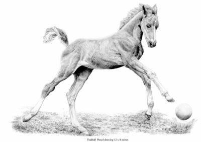 Foal Ball